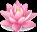 fleur fond